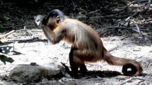 stone-monkey-m02