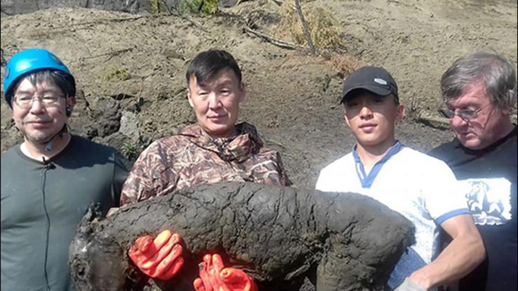 40 bin yıllık tay fosili
