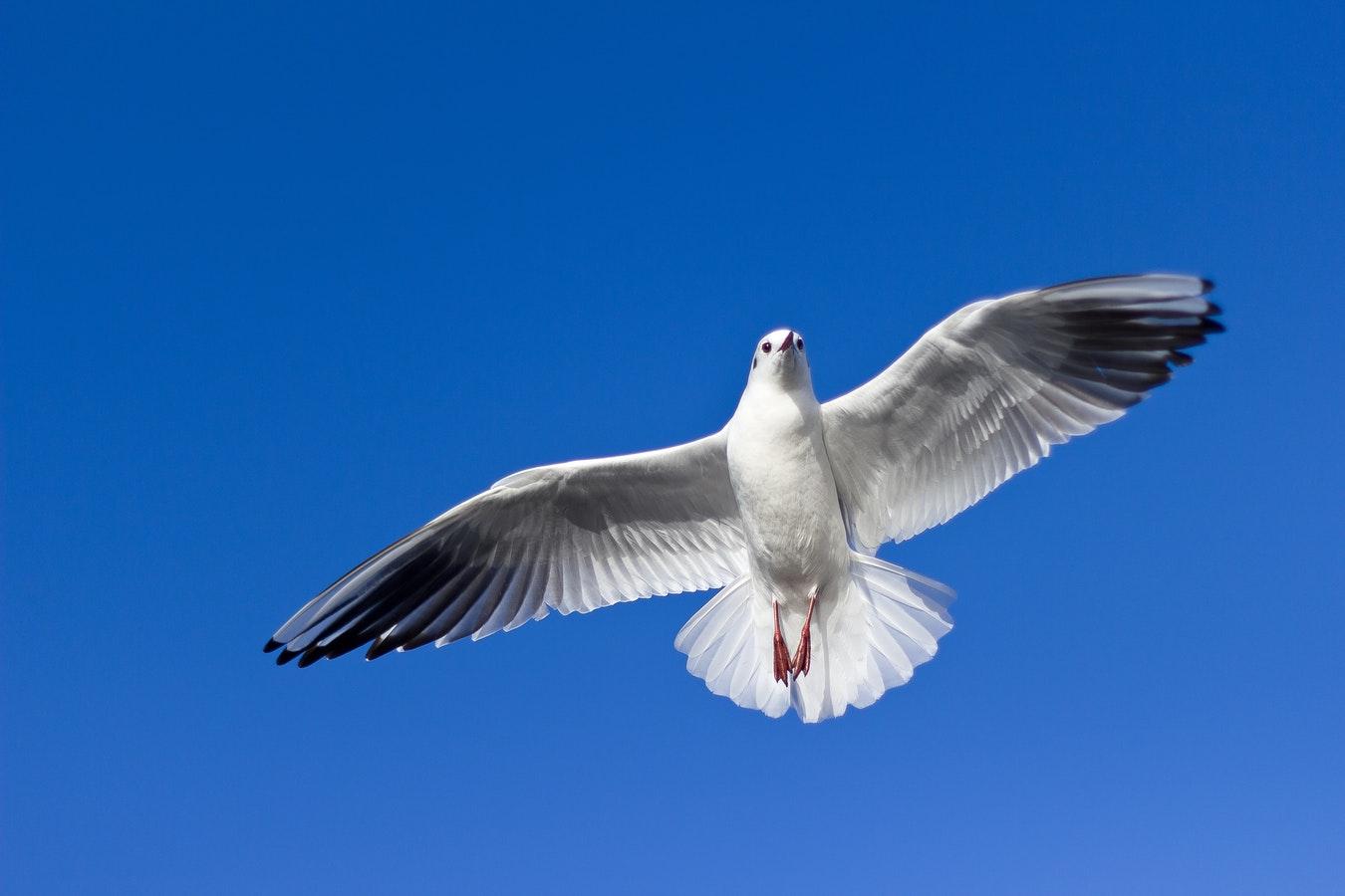 Talih Kuşu